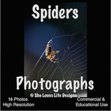 Photographs SPIDERS Photos Fall
