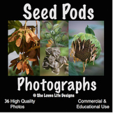 Photographs Seed Pods Fall Seeds