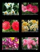 Spring Flowers Photos (BUNDLE)