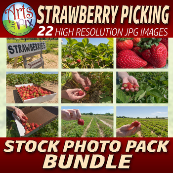 "! ""Strawberry Picking"" Photographs - Strawberries - Stock"