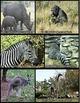 Animal Photos (BUNDLE)