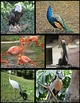 Photos: Birds
