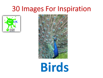 Photographs of Birds for Inspiration