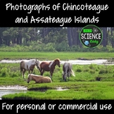 Photographs of Chincoteague and Assateague Islands
