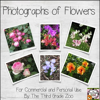 Photographs of Flowers