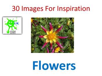 Photographs of Flowers for Inspiration