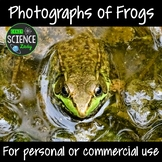 Photographs of Frogs
