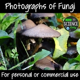 Photographs of Fungi