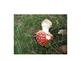 Photographs of Fungi for Inspiration