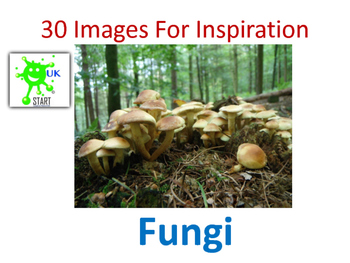 Photographs of Fungi for Inspiration