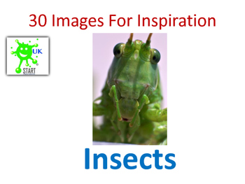 Photographs of Insects for Inspiration