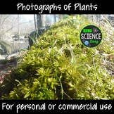 Photographs of Plants