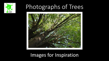 Photographs of Trees for Inspiration