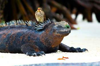Photography Image from the Galapagos Islands (Personal Photography)