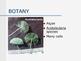 Photomicro graphs( Plant tissue)