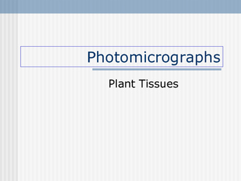 Photomicro graphs( Plant tissue)