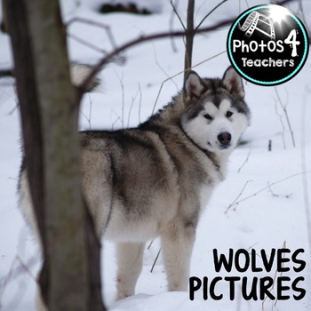 Photos 4 commercial use: WOLF