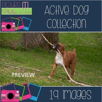 Photos: Active Dog