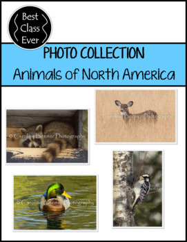 Photos Animal Collection