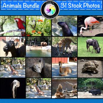 Stock Photos: Animals Growing Bundle