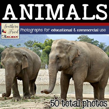 Animals Photos