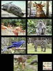 Animals Photographs (for Educational & Commercial Use)