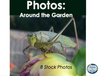 Photos: Insects Around the Garden [Personal & Commercial Use]