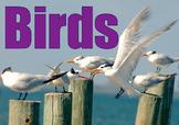 Photos : Birds