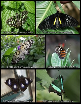 Photos: Butterflies