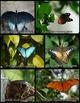 Photos: Butterflies