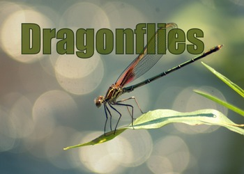 Photos : Dragonfly pictures