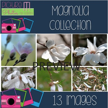 Photos: Magnolia Flower Evolution