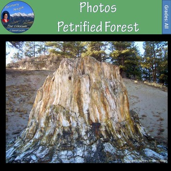Photos - Petrified Forest