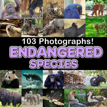 Photos ENDANGERED SPECIES