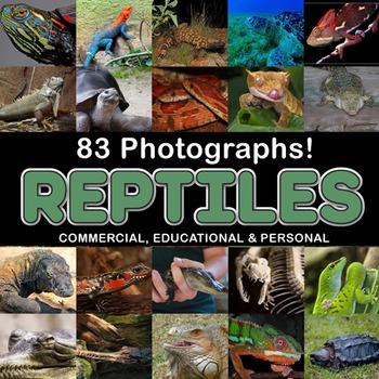 Photos Reptiles