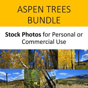 Photos/Photographs Aspen Trees for Personal and Commercial Use