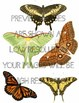 Photos Photographs BUTTERFLIES and MOTHS with LIFE CYCLES!!
