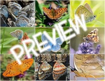 Photos/Photographs - Butterflies, Moths and Caterpillars