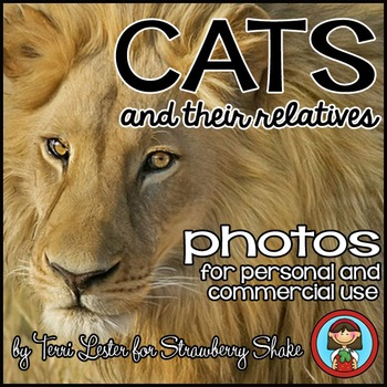 Photos Photographs CATS lion tiger cheetah jaguar ADAPTATIONS CLASSIFYING more!