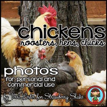 Photos Photographs CHICKENS - life cycle, adaptations, cla