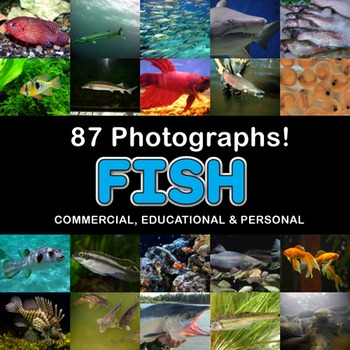 Photos Photographs FISH