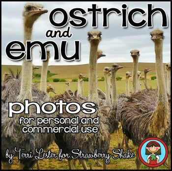 Photos Photographs OSTRICH and EMU birds chick eggs life cycle