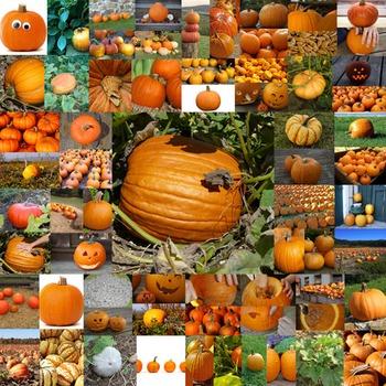 Photos Photographs Pumpkins clip art
