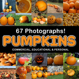 Pumpkin Photos