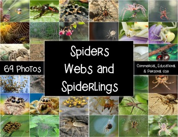 Photos/Photographs - Spiders, Spider Webs and Spiderlings