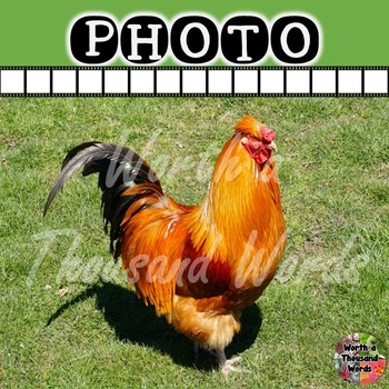 Photos: Rooster