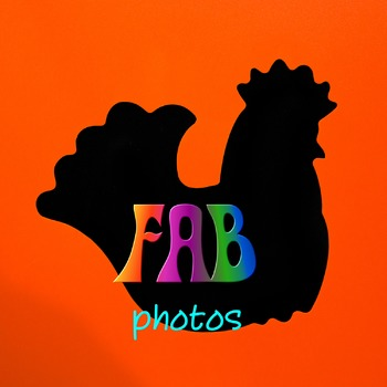 Photos - Farm Animals - Black Silhouettes on Colored Background