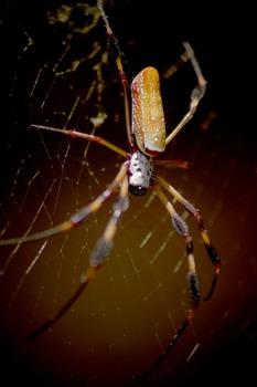 Photos: Spiders
