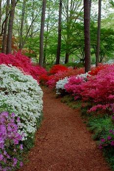 Photos : Spring Flowers