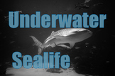 Photos : Underwater , Sea life for personal or commercial use
